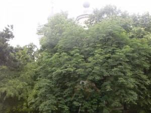 Tei-Biserica-Uspenia, 15iun2012,fotoAgata [800x600]