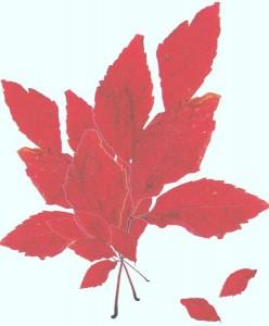 Crenguta din copacul rosu [800x600]