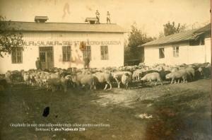 Gugoasa,grajduri