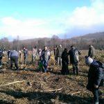 ROTARY CLUB BOTOSANI: 100 de voluntari,  1000 de puieti, la Vorona