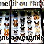 Tunelul cu fluturi (poem bilingv)