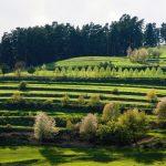 De vizitat în Gheorgheni… Două biserici baroce, un muzeu și un parc dendrologic