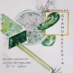 Integrarea materiei artificiale și organice în proiecte artistice. Regenerated Human, proiect al artistei Flavia Pintea