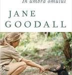 Necuvantatoarele mele? Superbe rudele noastre-cimpanzeii…cu care ne-a obisnuit Jane Goodall…